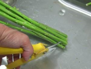 stem cutting